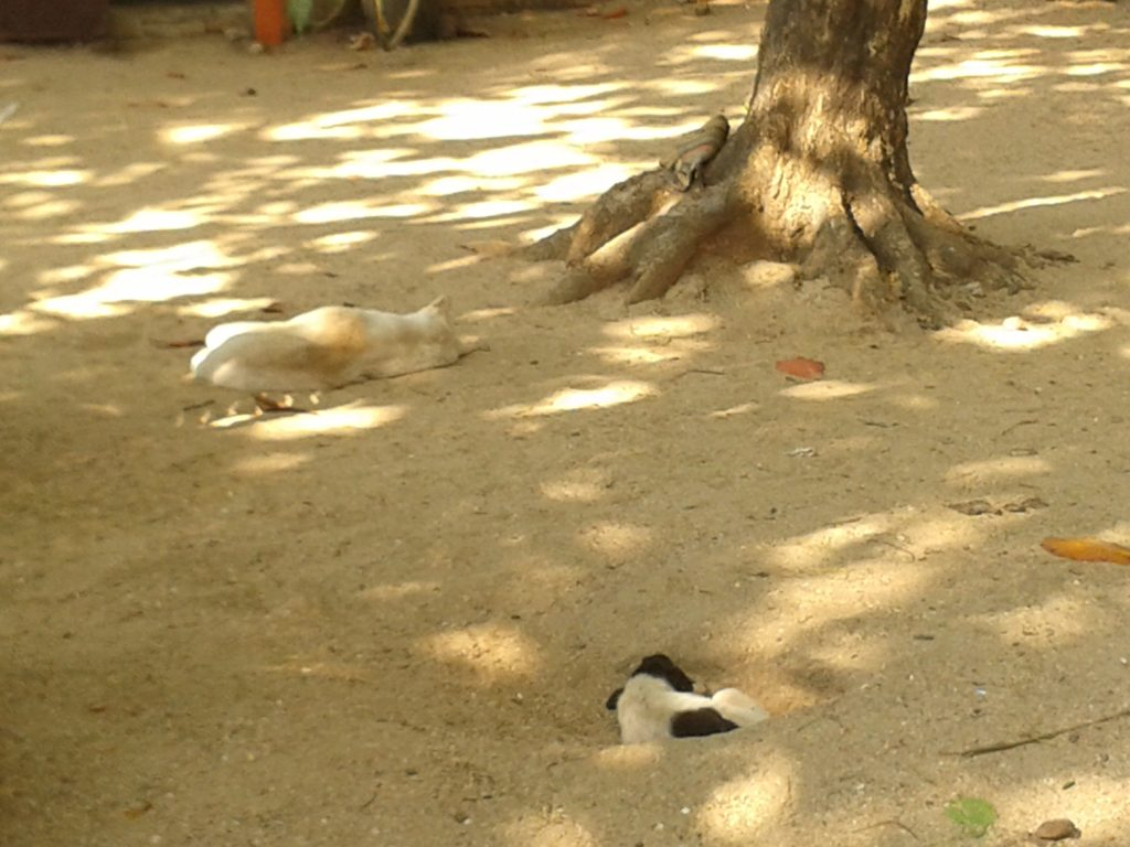napping stray dogs in India