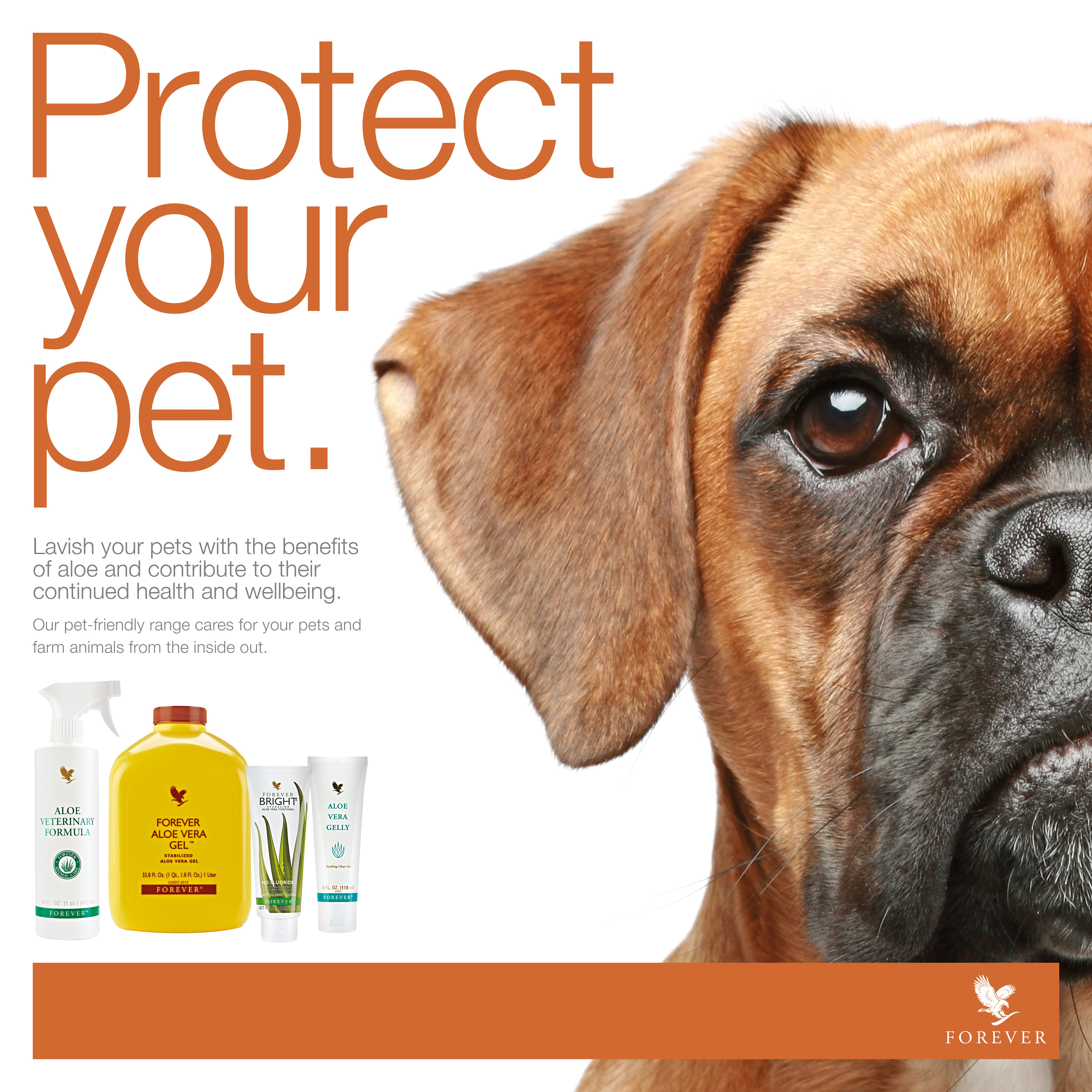 Aloe for dogs