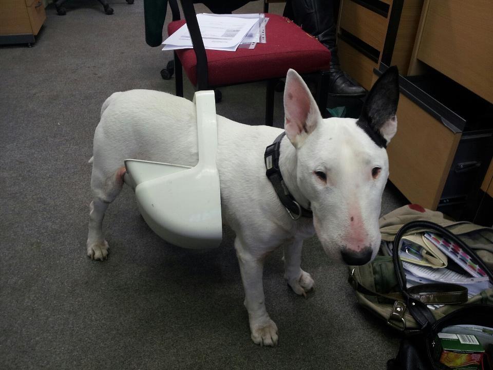 disobedient dog bin raider