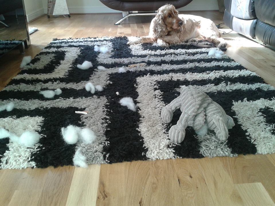 dog destroy toys