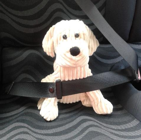 dogs bark in cars