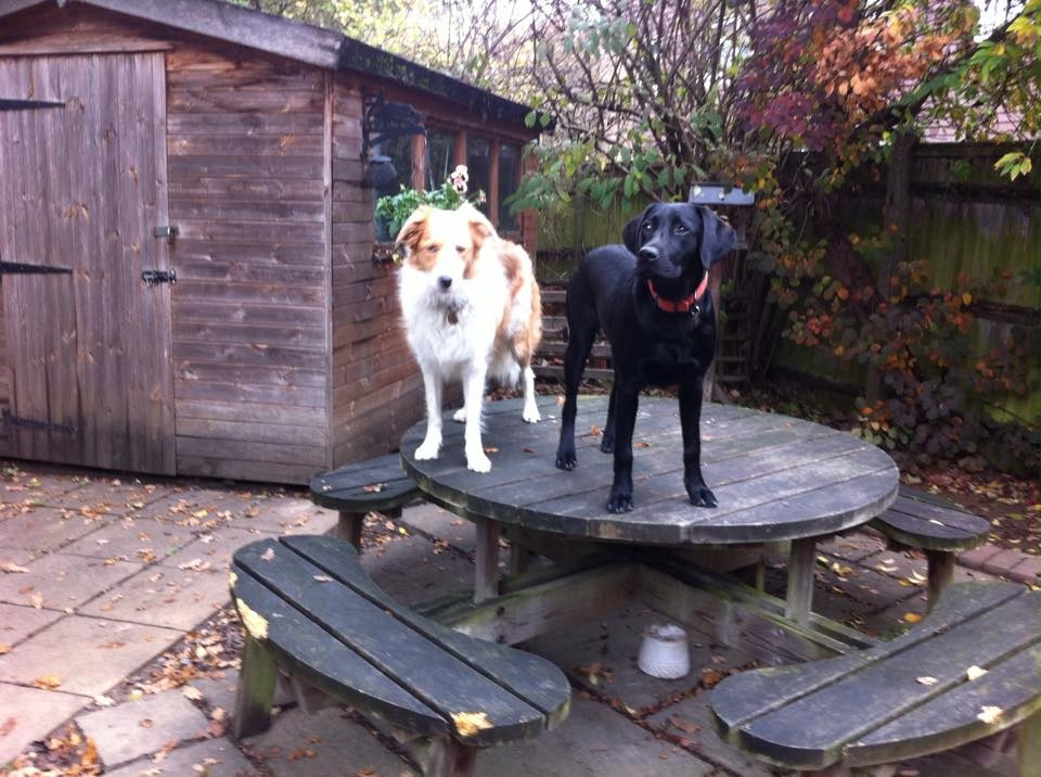 disobedient dogs on table