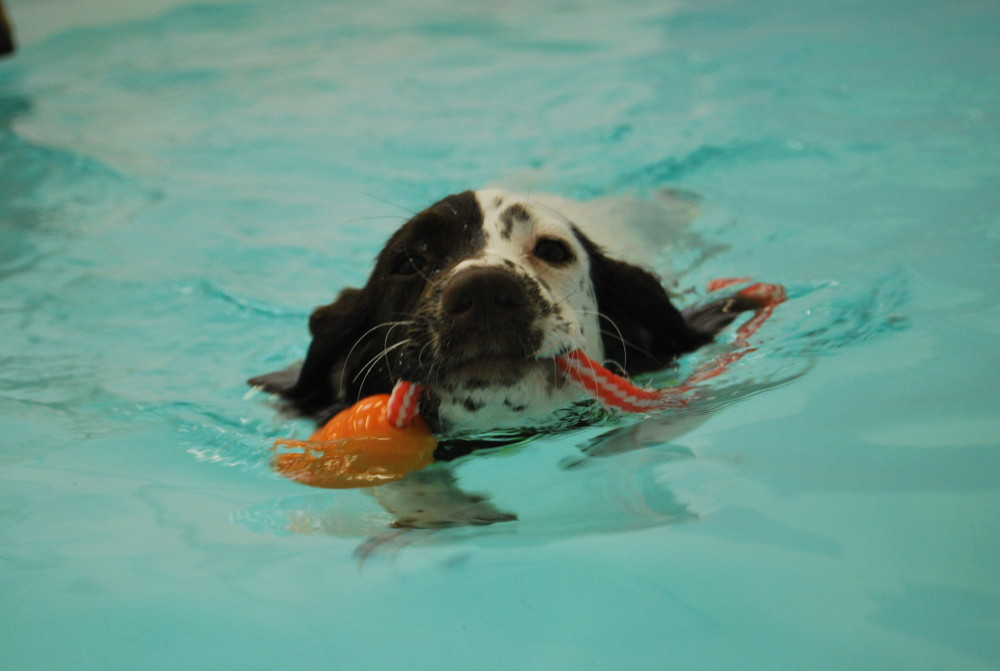 hydrotherapy for puppies