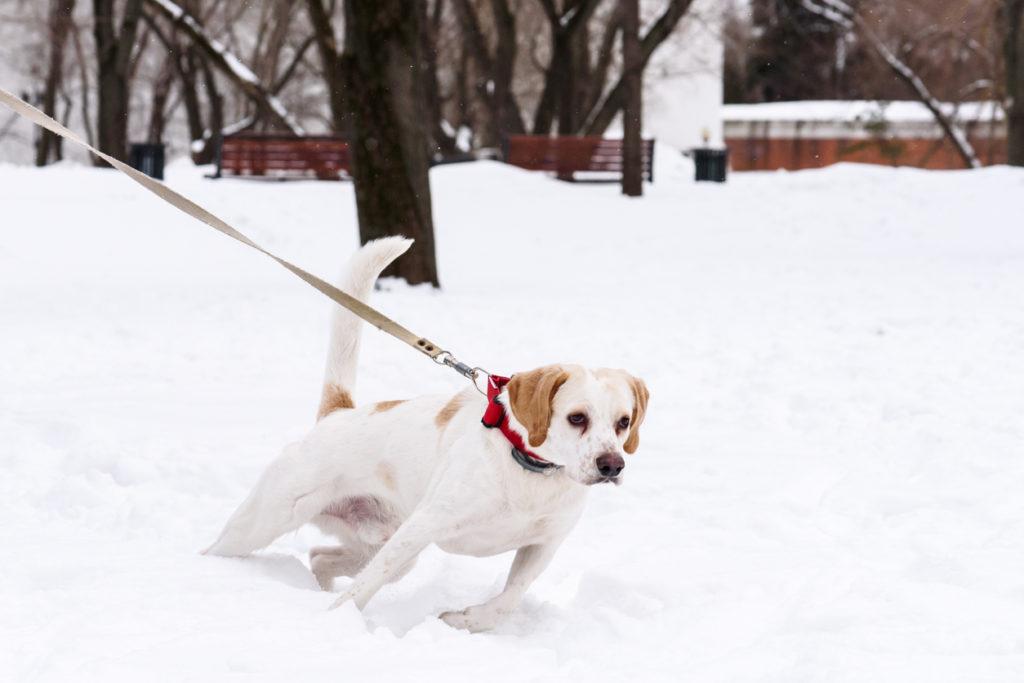 why dog training won't work